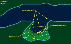 where-to-find-northern-pike