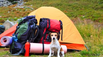 Essential Camping Gear for Beginners – Things You Need to Know