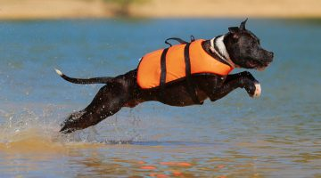 Best Dog Life Jacket (Vest) Reviews 2017 – Keep Your Dog Safe Around Water
