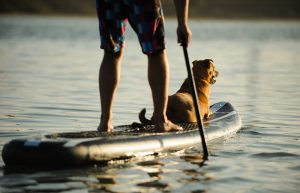 Inflatable Paddle Board with Dog