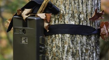 How to Use Trail Cameras During the Off Season Effectively