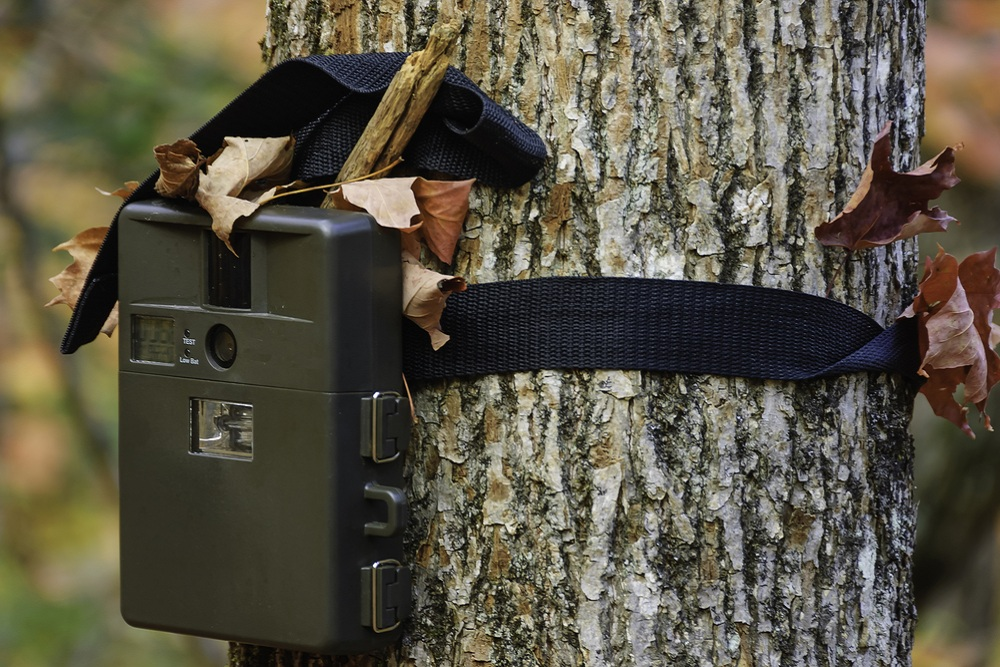 Use Trail Cameras During The Off Season