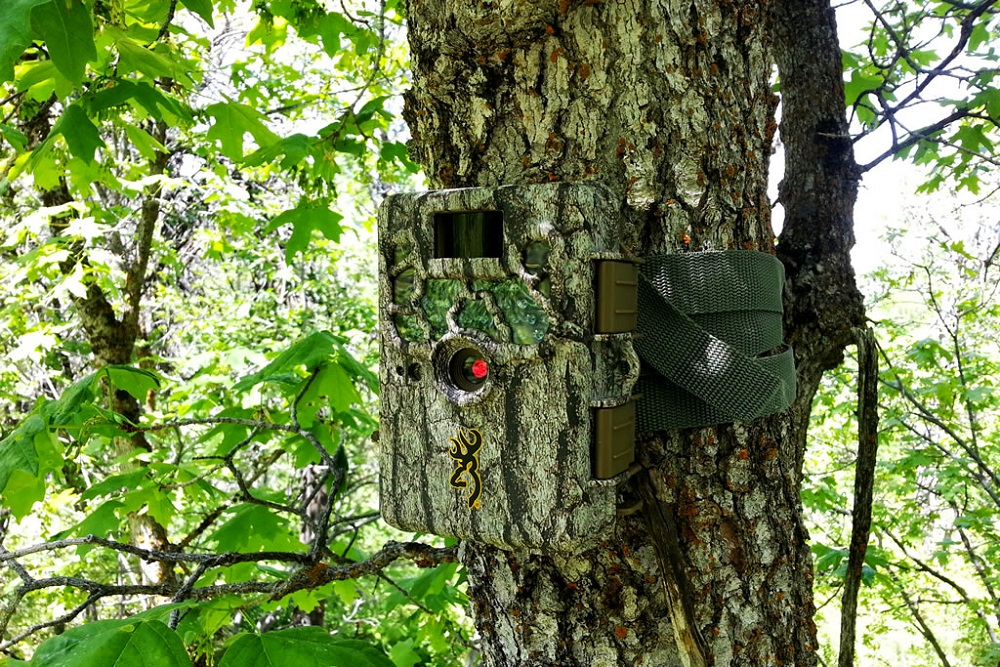 Best Trail Cameras 2019 12 Best Trail Camera Reviews 2019   Top Game Cameras for the Money