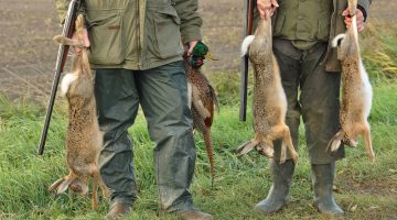 How to Hunt Rabbits – Rabbit Hunting Tips for Beginners