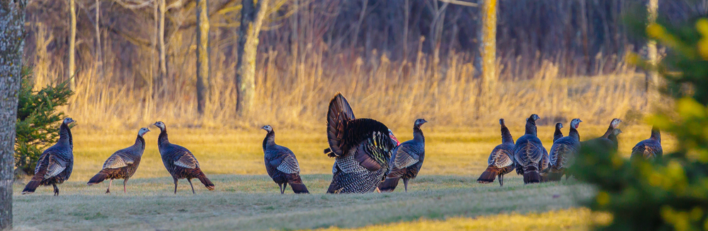 Prepare for Spring Turkey Season