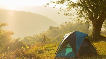 Best ways to get rid of ants when camping