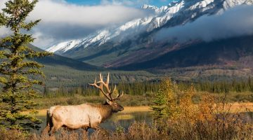 Best Elk Hunting States in the United States