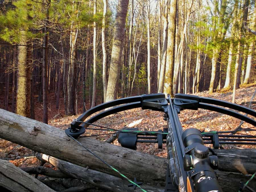 Crossbow resting on tree trunk in forest